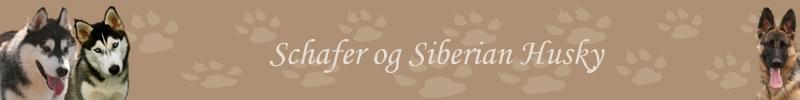 steistei-bloggar - Hausmynd